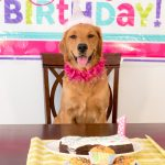Is it Your Dog's Birthday? 5 Fun Ideas to Celebrate